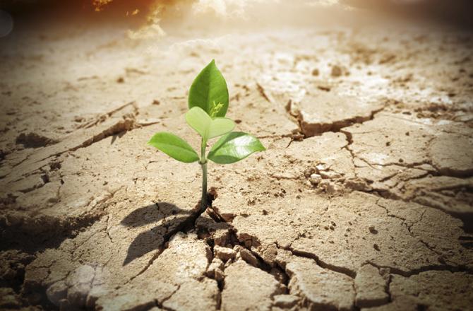 dnews-files-2015-11-miracle-plant-670-jpg.jpg
